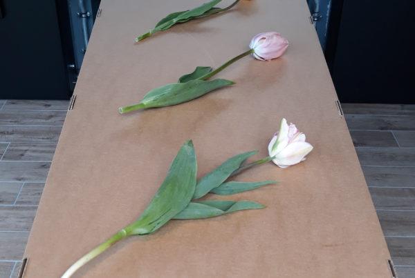 Kartonnen dooskist met tulpen